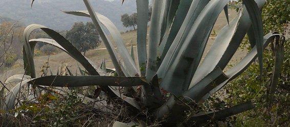 Spaanse uitdrukkingen over bomen en planten
