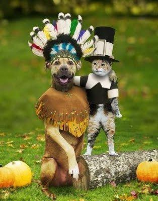 Spaanse uitdrukkingen over honden en katten 1