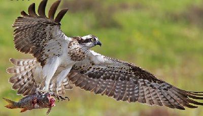 Toerisme Andalusië / Ornithologisch (Vogels)